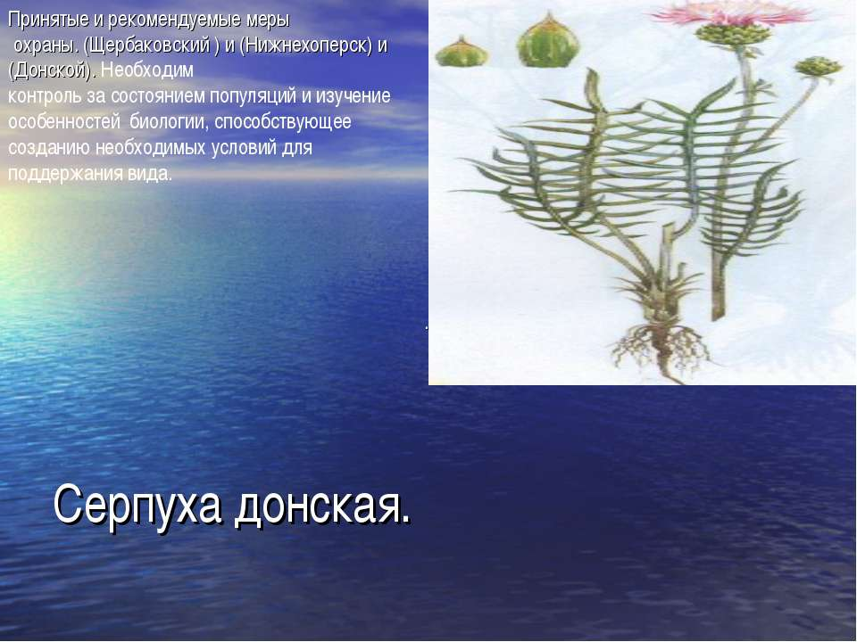 Серпуха донская. Принятые и рекомендуемые меры охраны. (Щербаковский ) и (Ниж...