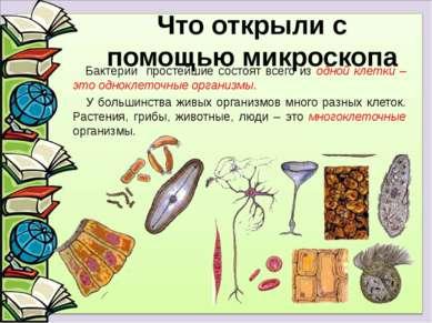 Бактерии простейшие состоят всего из одной клетки – это одноклеточные организ...