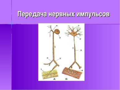 Передача нервных импульсов