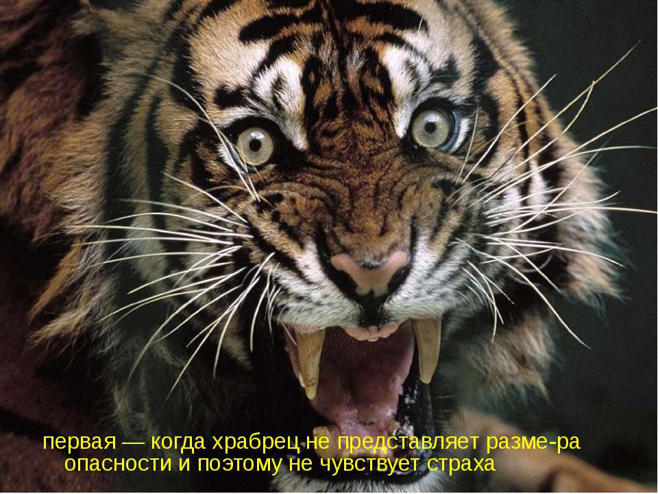 первая — когда храбрец не представляет разме-ра опасности и поэтому не чувств...