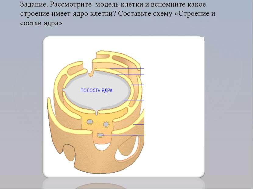Задание. Рассмотрите модель клетки и вспомните какое строение имеет ядро клет...