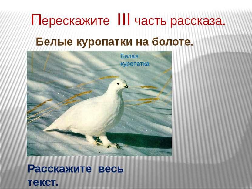 Перескажите III часть рассказа. Белые куропатки на болоте. Белая куропатка Ра...