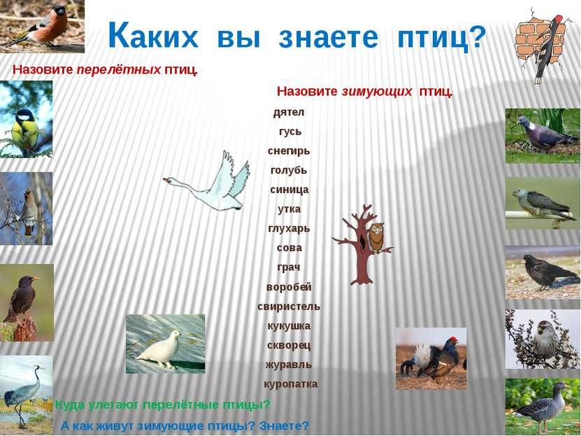 Каких вы знаете птиц? Назовите перелётных птиц. Назовите зимующих птиц. дятел...