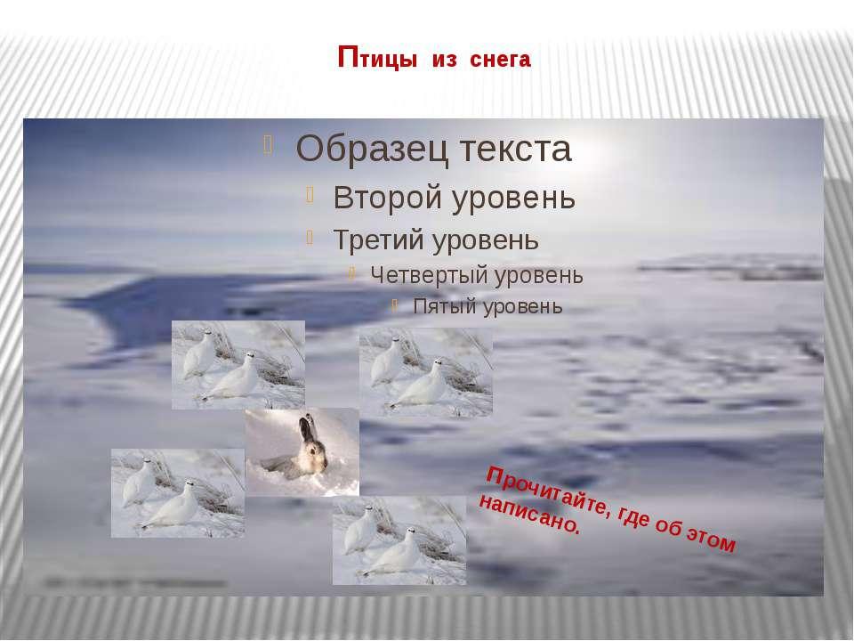 Птицы из снега прочитайте, где об этом написано.