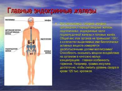 Главные эндокринные железы Это гипоталамус, гипофиз, эпифиз, щитовидная и пар...