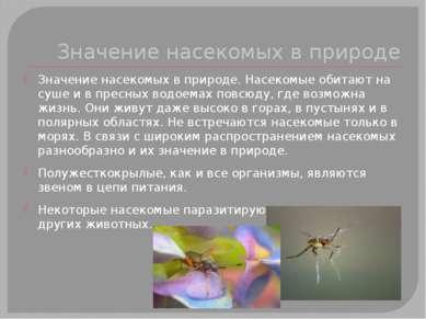 Значение насекомых в природе Значение насекомых в природе. Насекомые обитают ...