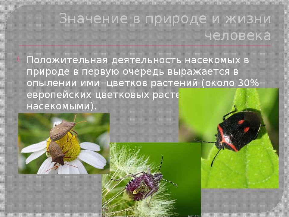 Значение в природе и жизни человека Положительная деятельность насекомых в пр...