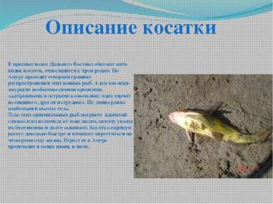 В пресных водах Дальнего Востока обитают пять видов косаток, относящиеся к тр...