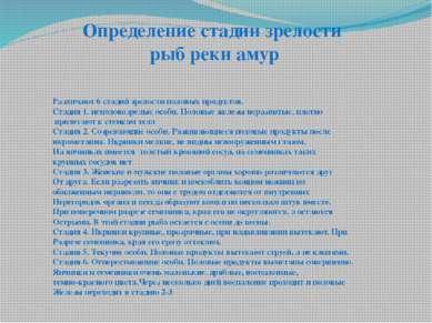 Определение стадии зрелости рыб реки амур Различают 6 стадий зрелости половых...