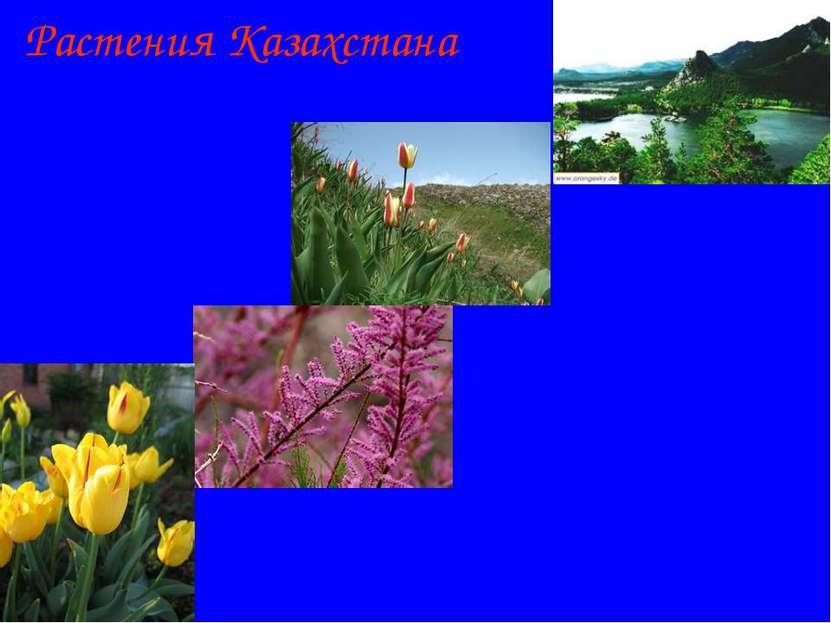 Растения Казахстана