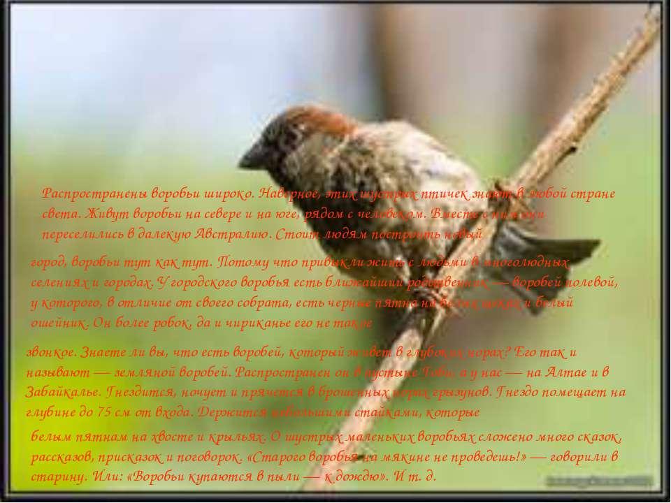Распространены воробьи широко. Наверное, этих шустрых птичек знают в любой ст...