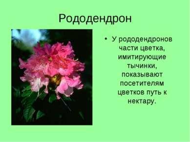 Рододендрон У рододендронов части цветка, имитирующие тычинки, показывают пос...