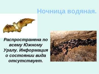 Ночница водяная. Распространена по всему Южному Уралу. Информация о состоянии...