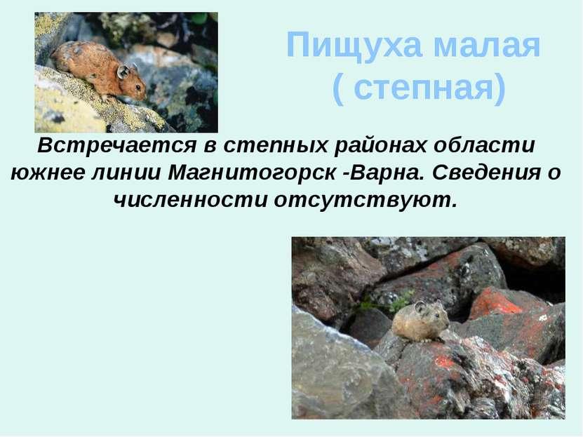 Пищуха малая ( степная) Встречается в степных районах области южнее линии Маг...