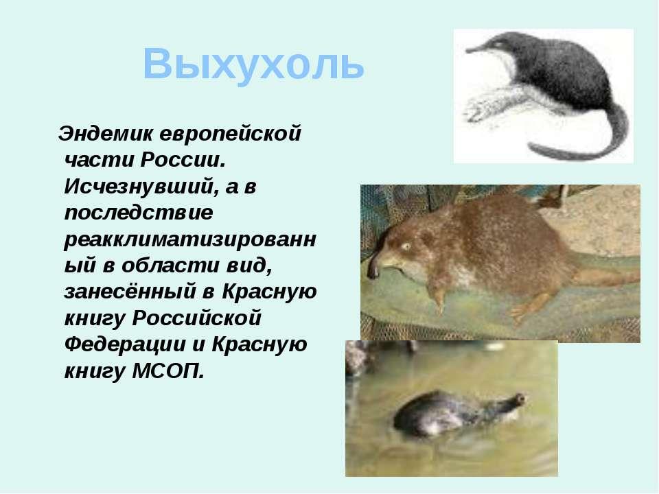 Выхухоль Эндемик европейской части России. Исчезнувший, а в последствие реакк...