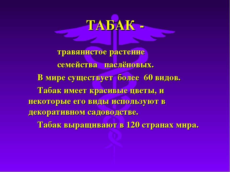 ТАБАК - травянистое растение семейства паслёновых. В мире существует более 60...