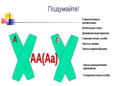 Подумайте! Гомологичные хромосомы Аллельные гены Доминантный признак Гомозиго...