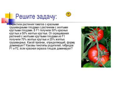 Решите задачу: Скрестили растения томатов с красными грушевидными плодами с р...