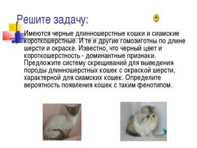 Решите задачу: Имеются черные длинношерстные кошки и сиамские короткошерстные...