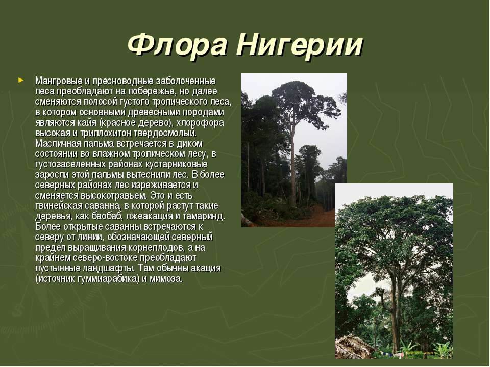Флора Нигерии Мангровые и пресноводные заболоченные леса преобладают на побер...