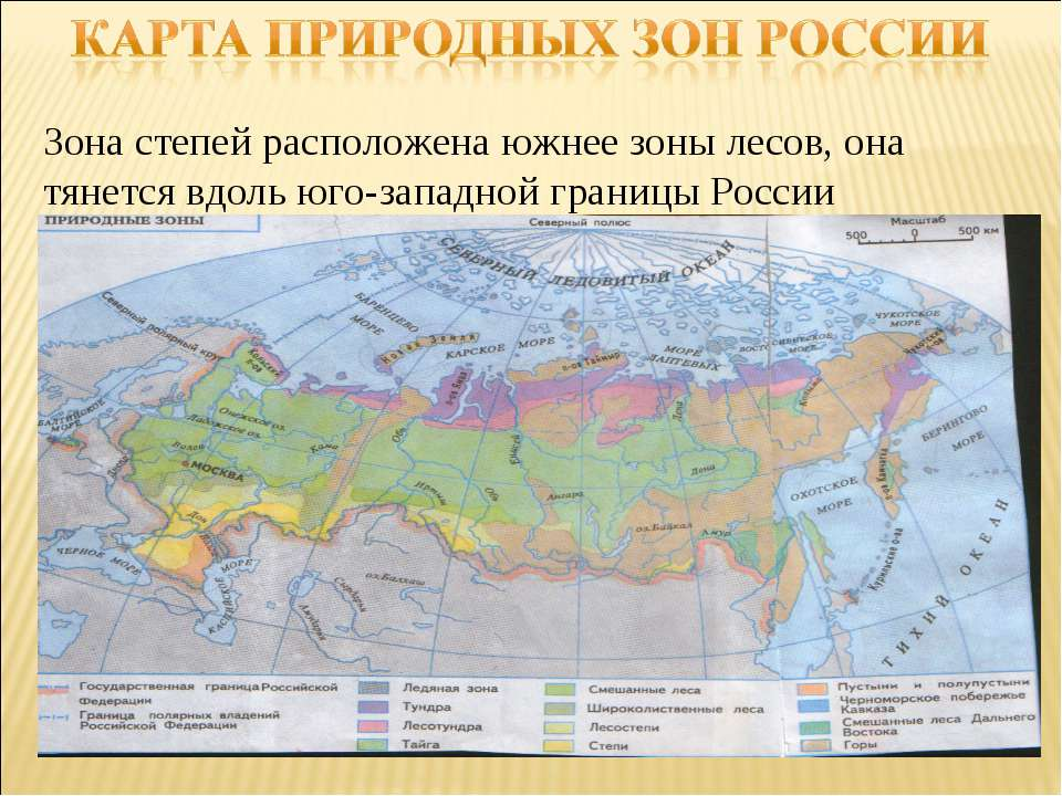 Зона степей расположена южнее зоны лесов, она тянется вдоль юго-западной гран...