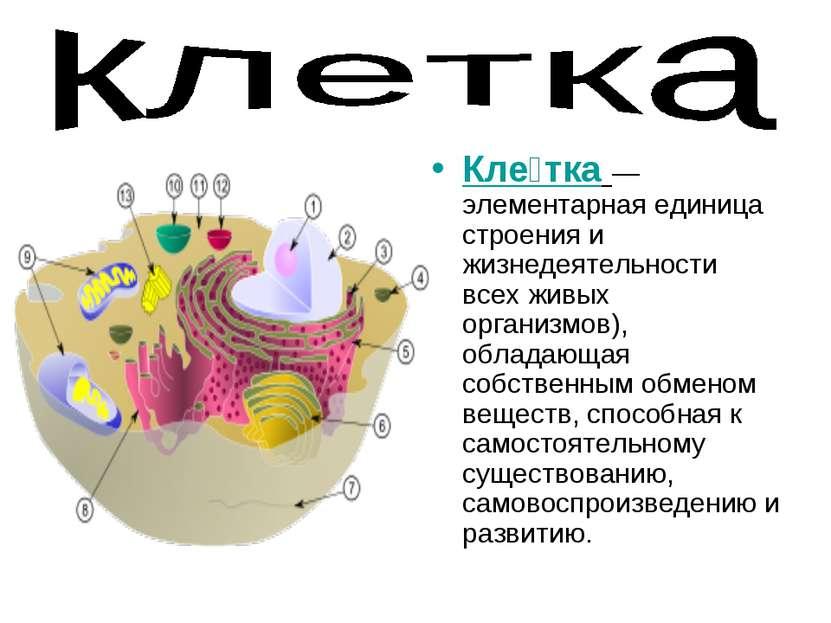 Кле тка— элементарная единица строения и жизнедеятельности всех живых органи...