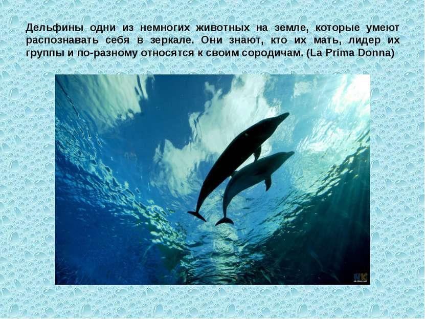 Дельфины одни из немногих животных на земле, которые умеют распознавать себя ...