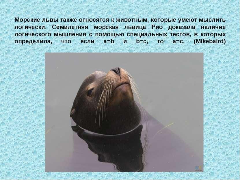 Морские львы также относятся к животным, которые умеют мыслить логически. Сем...