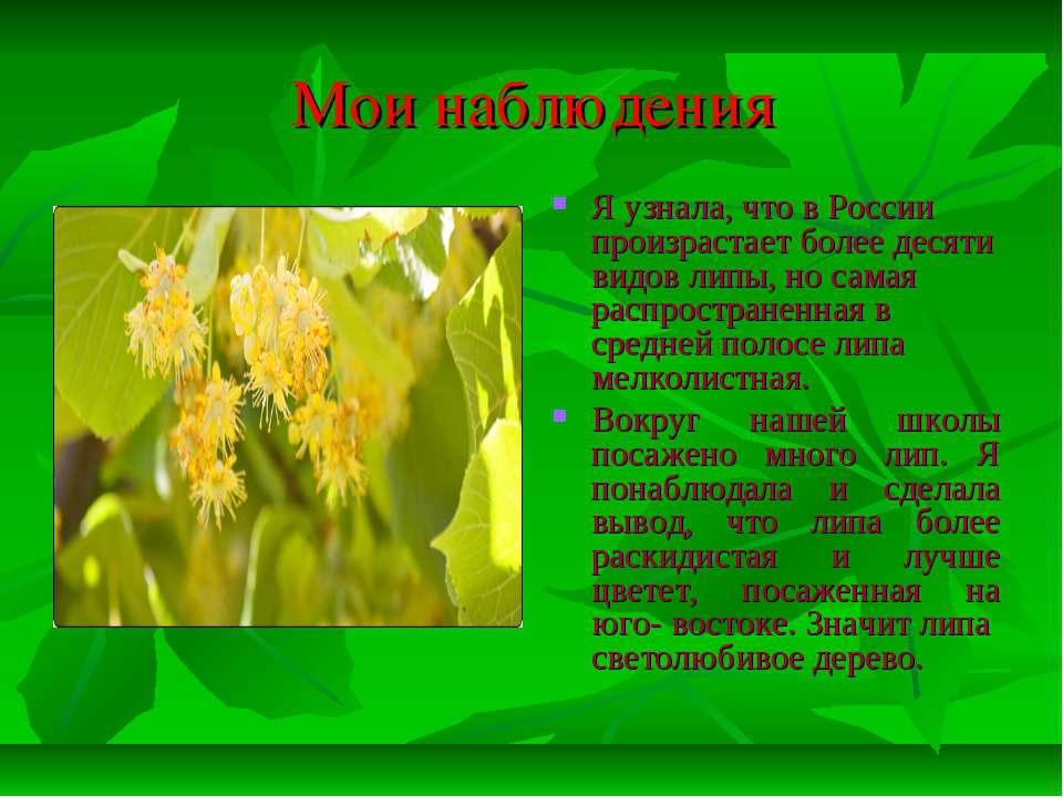 Мои наблюдения Я узнала, что в России произрастает более десяти видов липы, н...