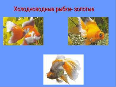 Холодноводные рыбки- золотые