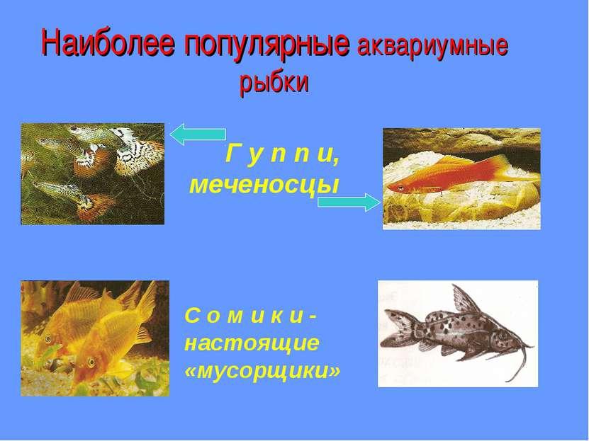 Наиболее популярные аквариумные рыбки Г у п п и, меченосцы С о м и к и - наст...