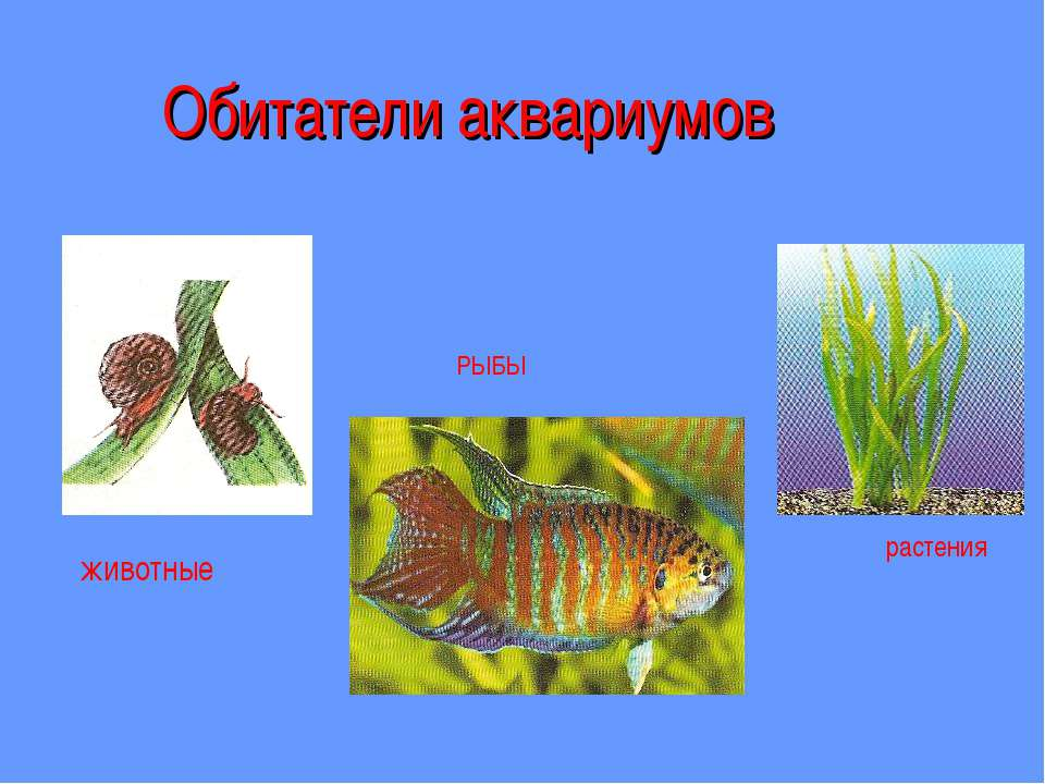 Обитатели аквариумов животные РЫБЫ растения