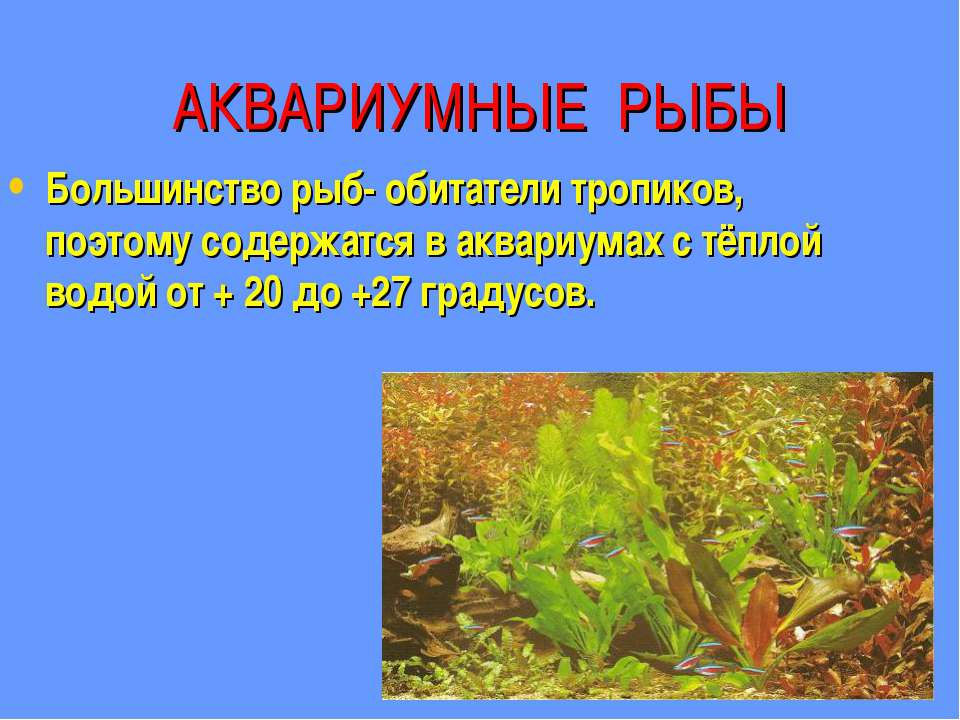 АКВАРИУМНЫЕ РЫБЫ Большинство рыб- обитатели тропиков, поэтому содержатся в ак...