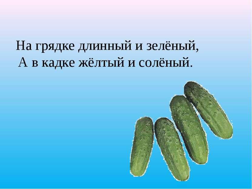 На грядке длинный и зелёный, А в кадке жёлтый и солёный.