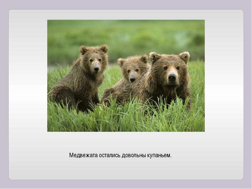 Медвежата остались довольны купаньем.