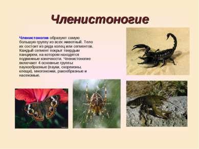Членистоногие Членистоногие образуют самую большую группу из всех животный. Т...