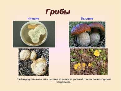 Грибы Низшие Высшие Грибы представляют особое царство, отличное от растений, ...