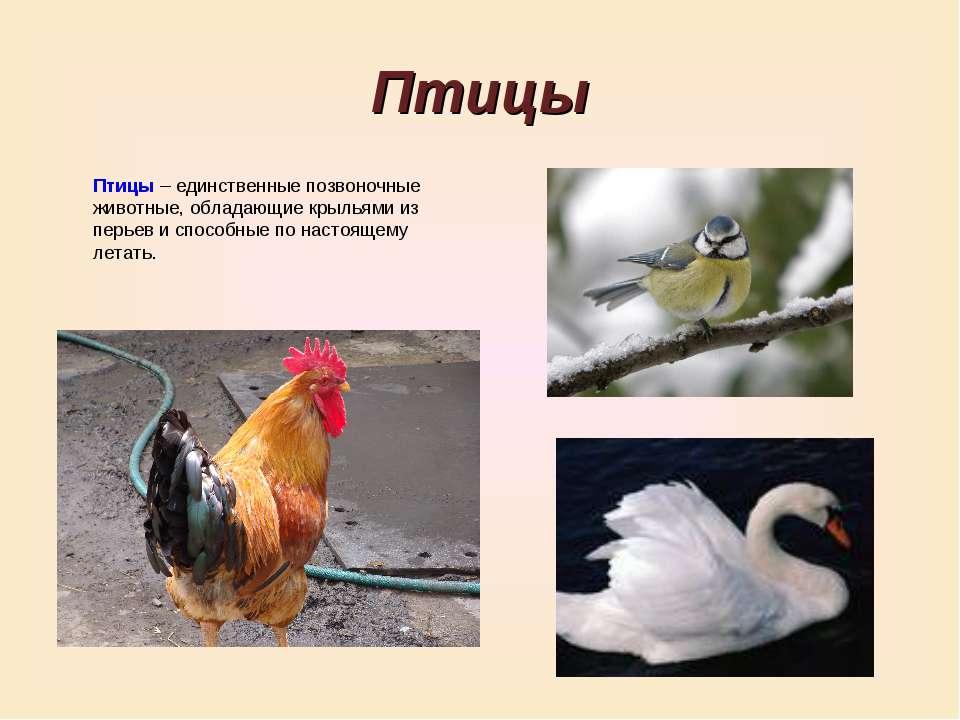 Птицы Птицы – единственные позвоночные животные, обладающие крыльями из перье...