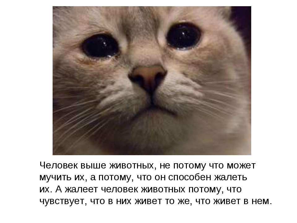 Человек выше животных, непотому что может мучить их,апотому, что онспособ...