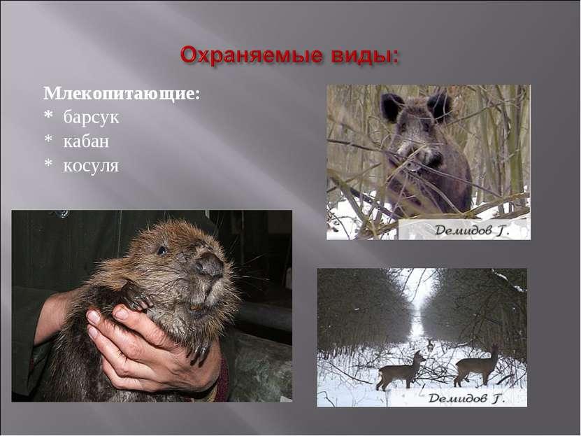 Млекопитающие: Млекопитающие: * барсук * кабан * косуля