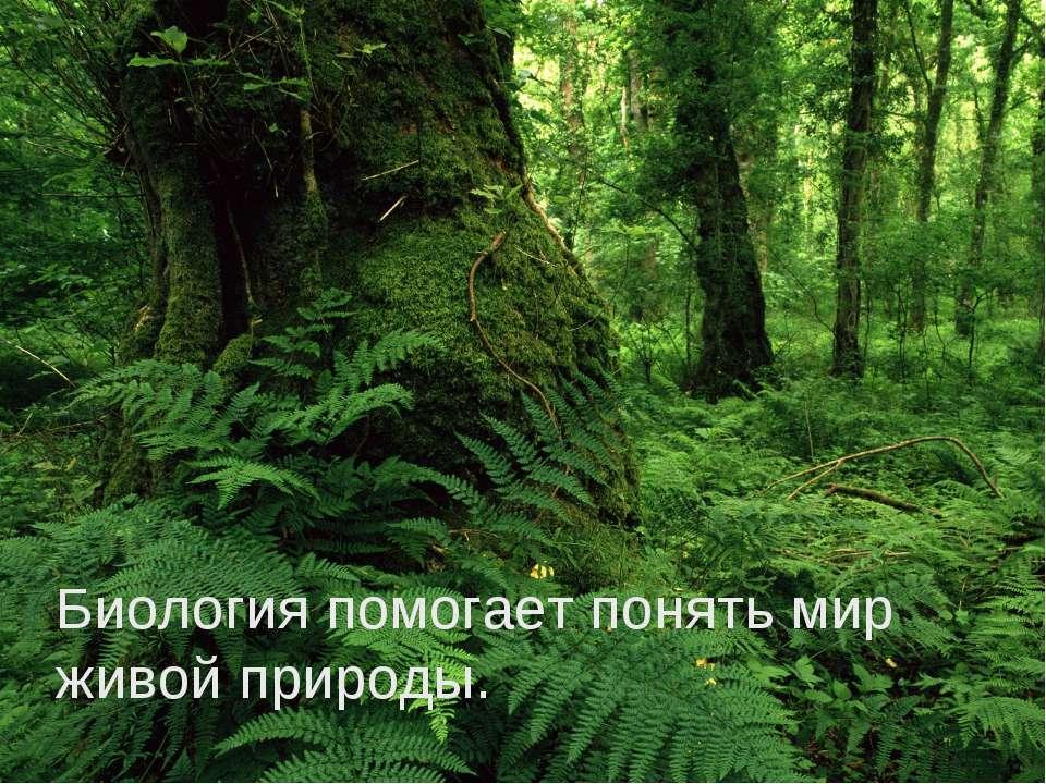 Биология помогает понять мир живой природы.