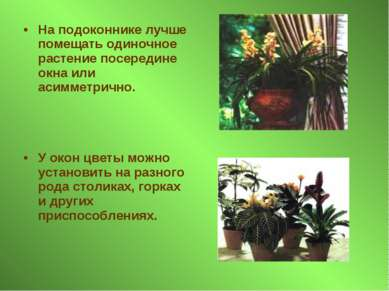 На подоконнике лучше помещать одиночное растение посередине окна или асимметр...