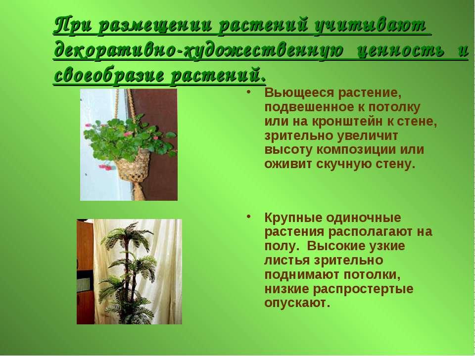 При размещении растений учитывают декоративно-художественную ценность и своео...