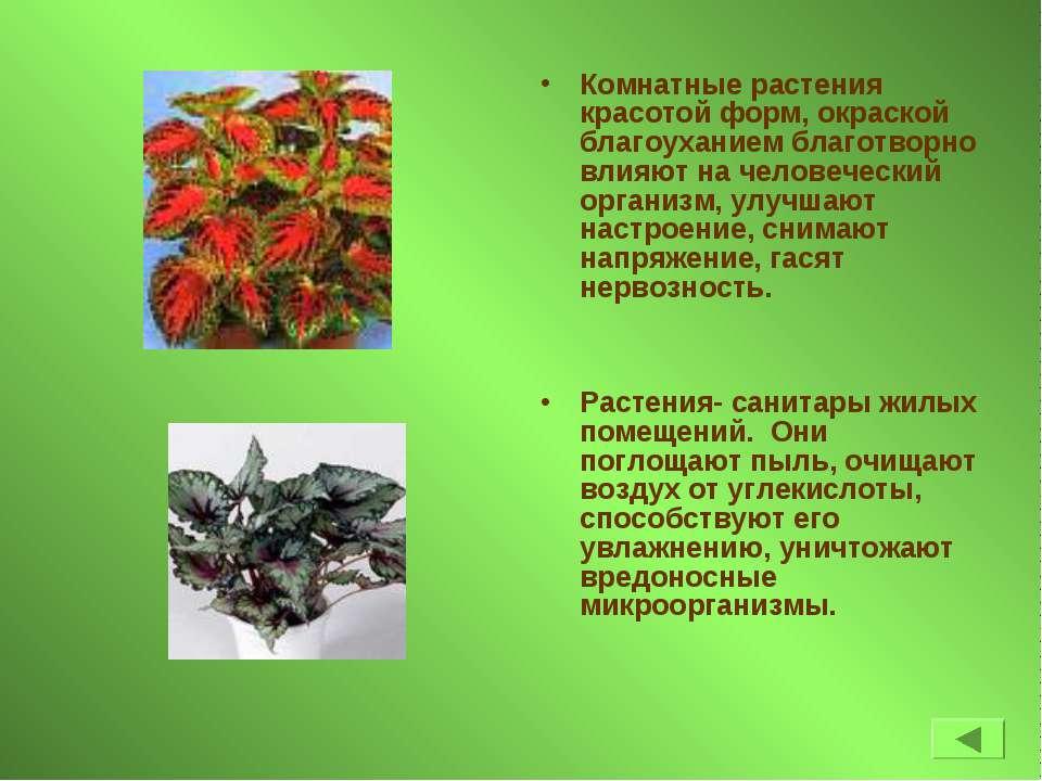Комнатные растения красотой форм, окраской благоуханием благотворно влияют на...
