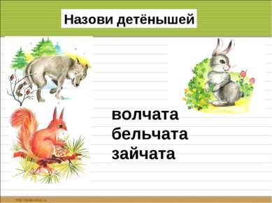 Назови детёнышей волчата бельчата зайчата
