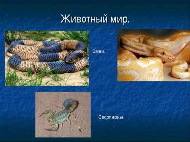 Животный мир. Змеи. Скорпионы.