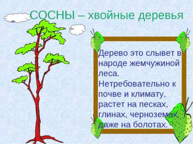 СОСНЫ – хвойные деревья Дерево это слывет в народе жемчужиной леса. Нетребова...