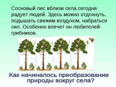 Сосновый лес вблизи села сегодня радует людей. Здесь можно отдохнуть, подышат...