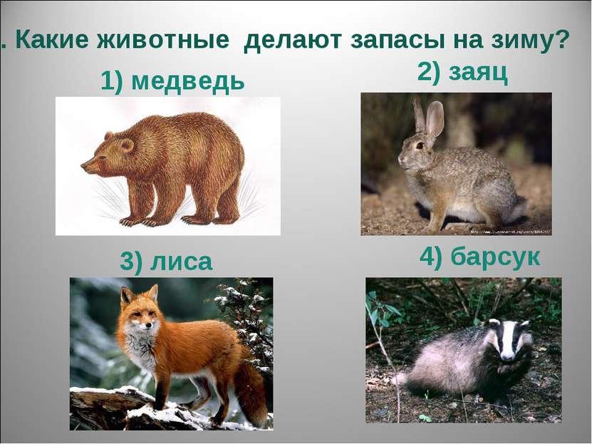 5. Какие животные делают запасы на зиму? 1) медведь 4) барсук 3) лиса 2) заяц
