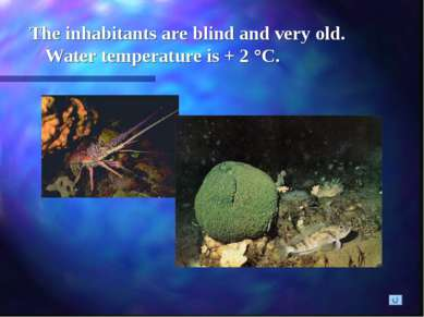 The inhabitants are blind and very old. Water temperature is + 2 °C.